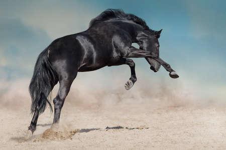 L'étalon noir court sur la poussière du désert sur fond bleu