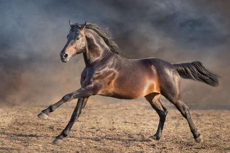 Bay horse with lomg mane