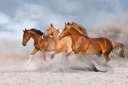Horse herd galloping on sandy dust against sky Archivio Fotografico