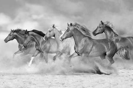 Horses run gallop isolated on desert dust. Black and white Imagens