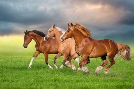 Horse herd run gallop on spring green meadow
