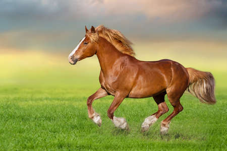 Red horse run gallop on spring green meadow Imagens