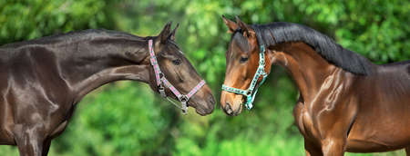 Two horse portrait against green background
