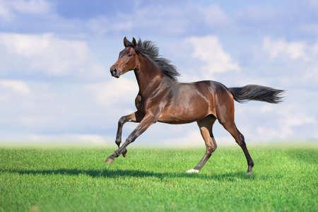Horse run gallop on spring green meadow
