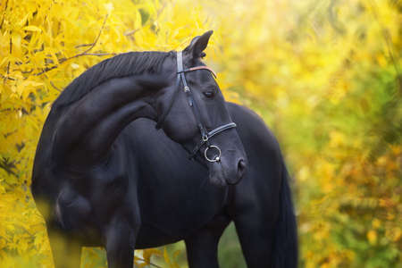 Black horse standing on fall ladscape