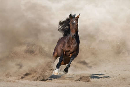 Stallion with long mane run fast against desert dust Stockfoto