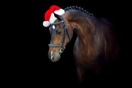Bay horse portrait in christmas wreath against christmas lights
