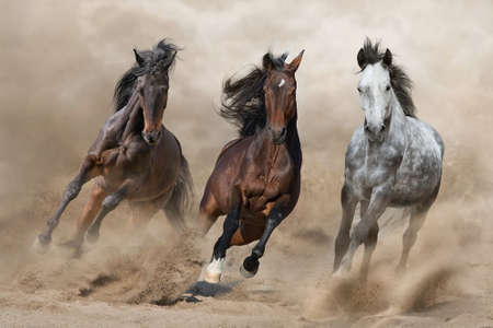 Red horse trotting free on desert sand