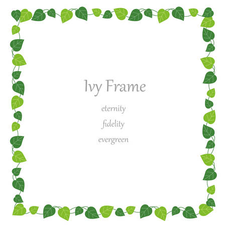 Square ivy frame, vector illustration.