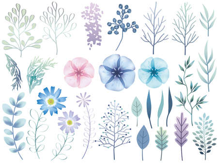 Set of assorted botanical elements, vector illustration. Ilustração