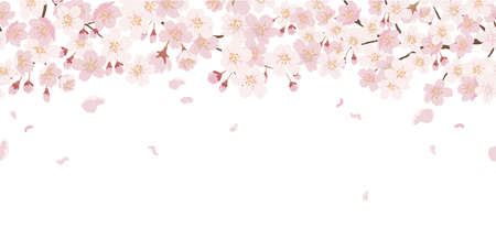 Seamless Floral Background With Cherry Blossoms In Full Bloom Isolated On A White Background. Vector Illustration With Text Space. Horizontally Repeatable.