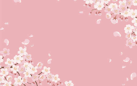 Floral Background With Cherry Blossoms In Full Bloom On A Pink Background. Vector Illustration With Text Space.