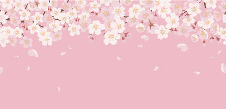 Seamless Floral Background With Cherry Blossoms In Full Bloom On A Pink Background. Vector Illustration With Text Space. Horizontally Repeatable.