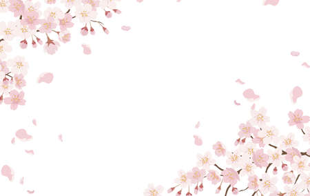 Floral Background With Cherry Blossoms In Full Bloom Isolated On A White Background. Vector Illustration With Text Space. Ilustração