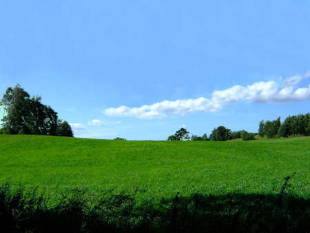 Green field with a blue sky in the summer Stock Photo - 7232074