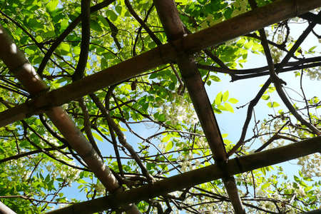 A view through a natural skylight formed by bamboo and trees photo