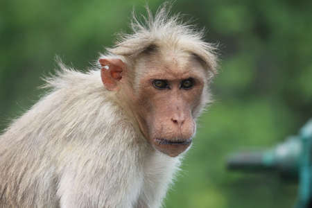 intriguing: Intriguing look of monkeys face