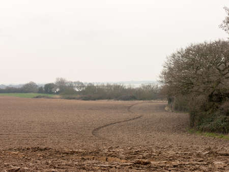 riverside trees: A lovely landscape of soil with a tractor line.