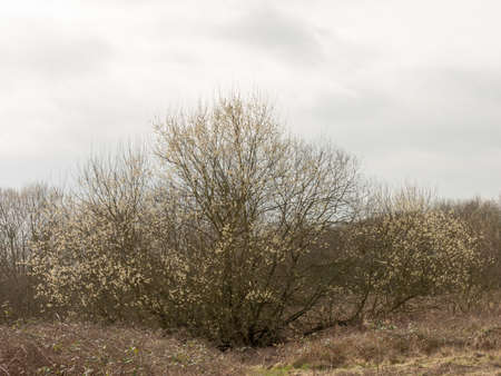 chaco: A Beautiful tree coming back to life in early spring. Stock Photo