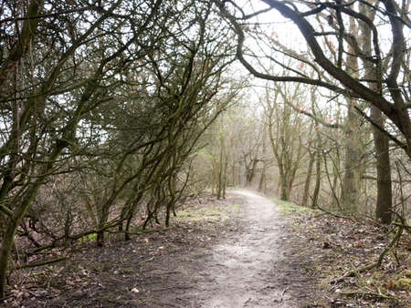 A mysterious tree-domed pathway in the woods of the lakes of Wivenhoe. Stock Photo