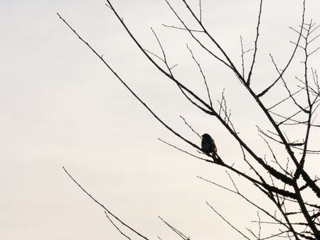 schein: A bird sits in the tree at sunset. Stock Photo