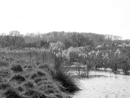 A shot of some reeds in a river bank