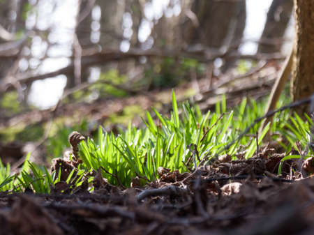 a lowdown shot of some grass in the middle of a forest Stock Photo