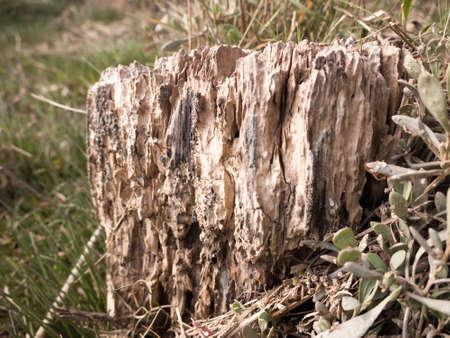Macro shot of tree stump taken in sunlight Stock Photo