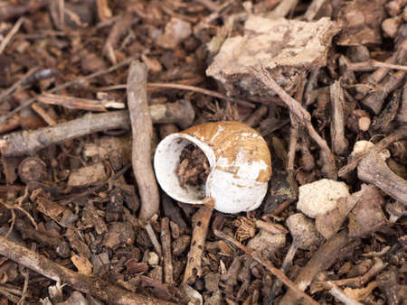 freshwater snails: Empty snail shell on the forest floor