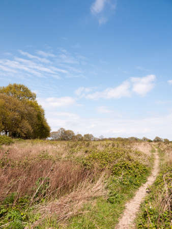 a nice lush landscape shot of shrub land in essex countryside with a clear blue sky and bits of clouds and green trees in spring time heat and light Stock Photo