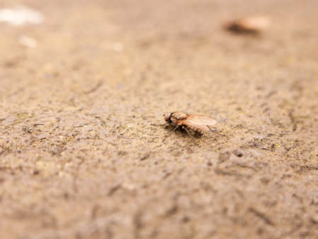 a fly resting on the ground detail and macro close up stunning and scary phobia nice texture