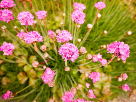 small pink flower heads poking up in a swirl many