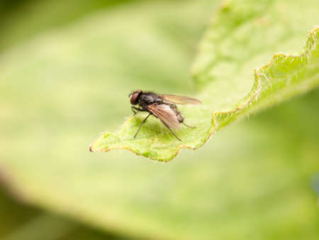 close up small fly from behind on top of leaf Stock Photo