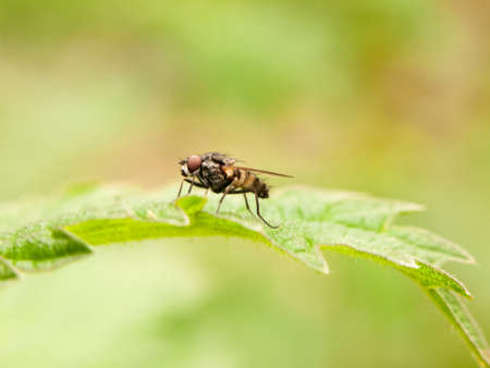 close up sharp shot of fly resting on a leaf from side