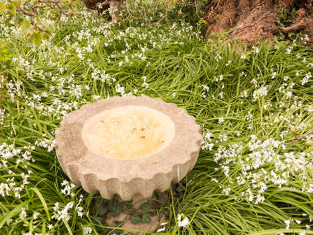 angels fountain: small marble fountain outside in garden with white flowers around