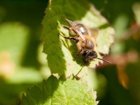 a bee outside resting upon a leaf in the spring day time forest