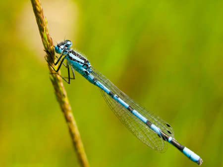 beautiful blue close up macro of detailed blue dragonfly