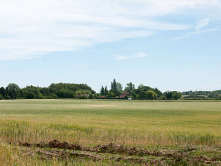 agrarian: a farmers field growing in the summer on a bright clear day no people