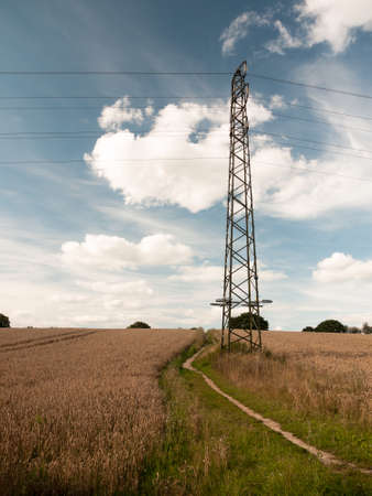 torres eléctricas: landscape scene of pylon in a wheat field in the country farm.