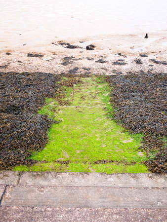 seaweed below steps at seaside front onto mudflats river; England; UK