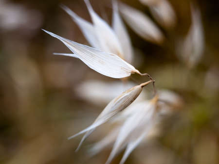 white flower heads petals blades close up unique.