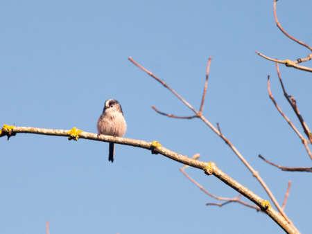beautiful bird in autumn tree branch up close blue sky; essex; england; uk
