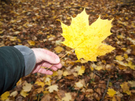 Outstretched hand in front holding a full yellow orange golden fall autumn leaf nature