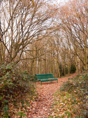 green forest public bench empty solitude tree arch autumn winter fallen leaves brown; essex; england; uk Stock Photo