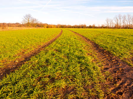 farm fields rows growing green plants fresh winter landscape; essex; england; uk 스톡 콘텐츠