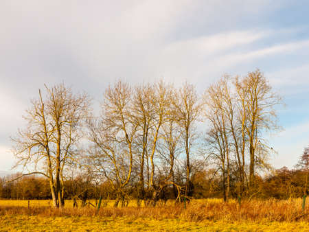 country day landscape field trees grass autumn winter; essex; england; uk Stock Photo
