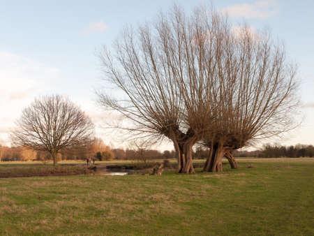 farm field grass winter bare trees dedham uk; essex; england; uk