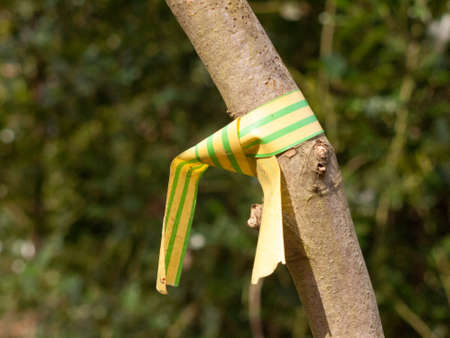 yellow and green plastic wrapped tied around tree close up branch uk tagging forestry; essex; england; uk