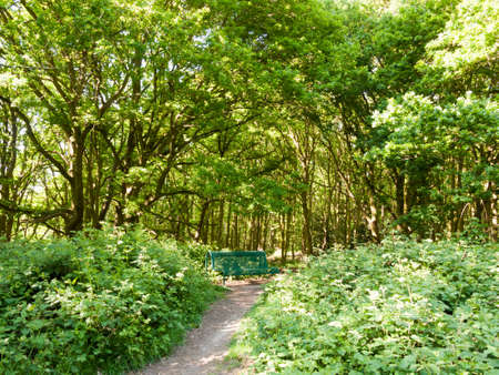 lush woodland landscape background with empty green chair and path; essex; england; uk