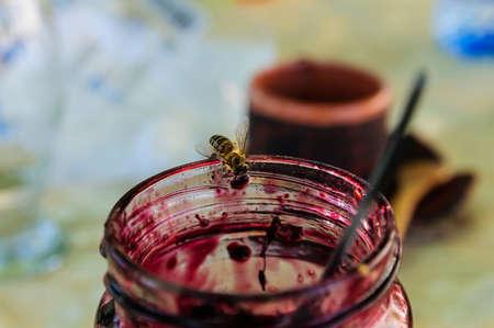 curare teneramente: Vaso di custodire confettura con alimentazione ape